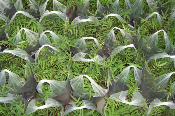 すべての講義 50 計算 : 刺蔥--新興果樹農場 Shin Shin ...